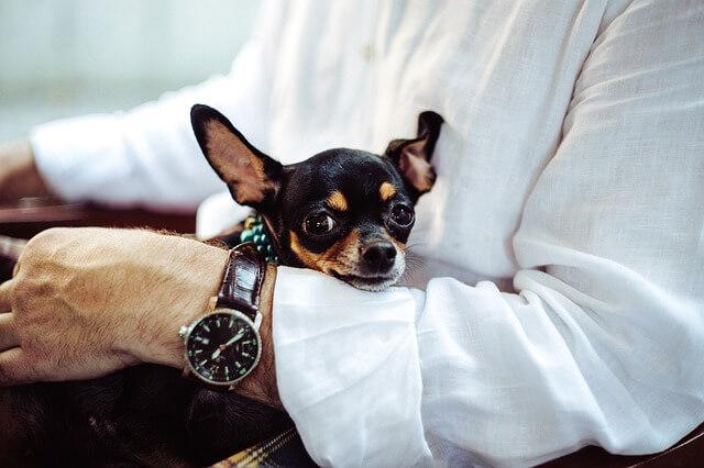 Elegancka koszula i zegarek