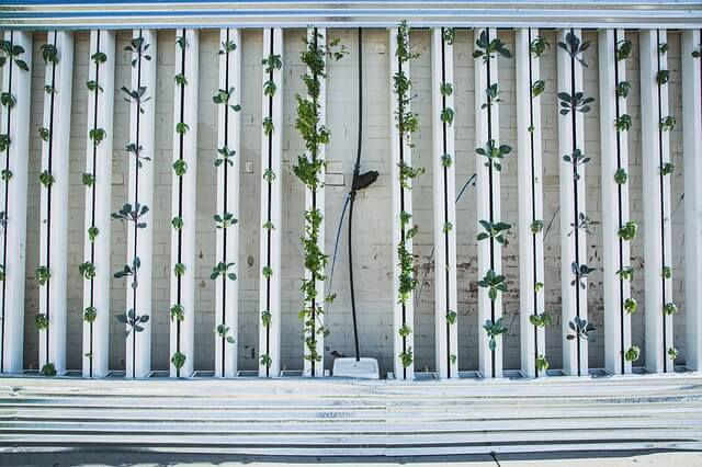 Zielona ściana pokrytwa roślinnością