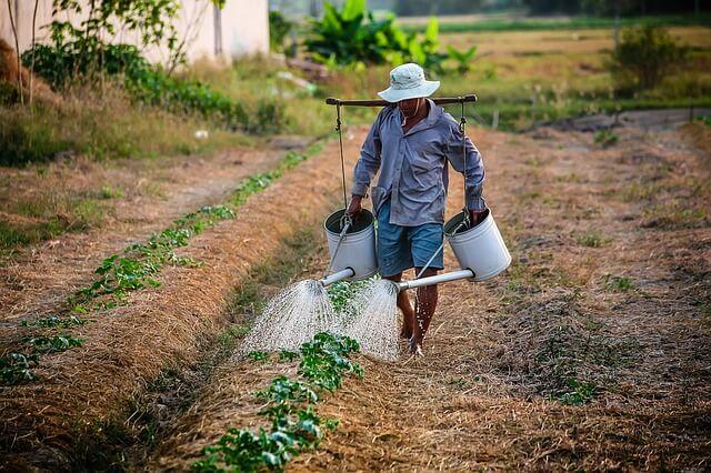 mężczyzna podlewający rośliny