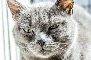 jak często kąpać kota 4