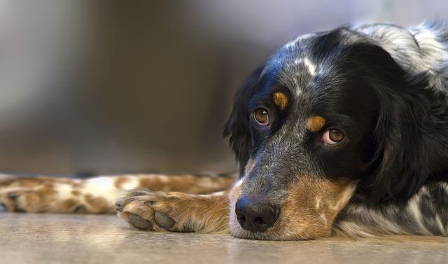 Jak usunąć kleszcza psu