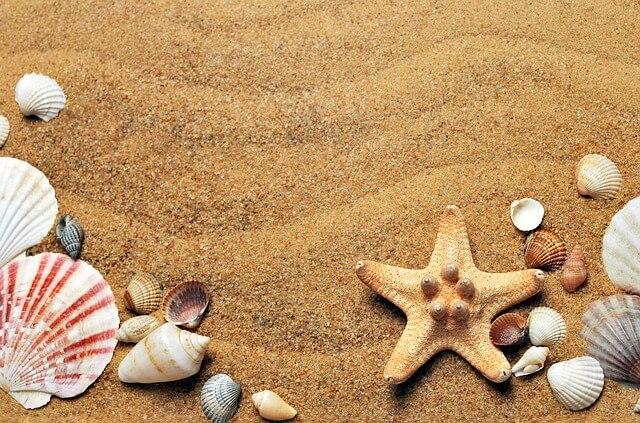 muszle i rozgwiazda na piasku