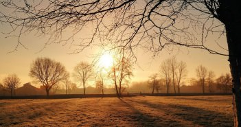 pole i drzewa jesienią