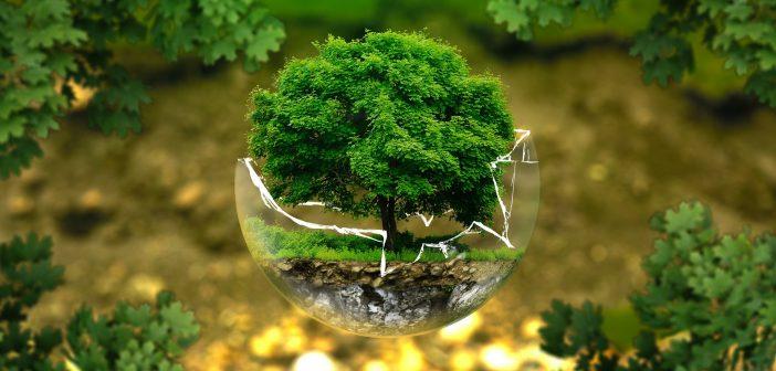 Zielone drzewo w kuli