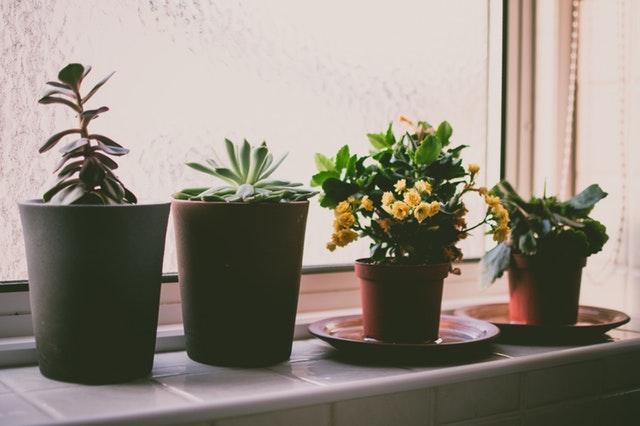 Kwiaty w doniczce
